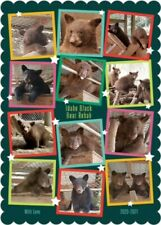 Send an Idaho Black Bear Rehab Holiday Card!