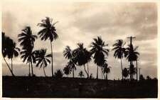 Puerto Rico birds eye view palm trees night scene real photo pc Y11589