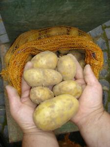 "Kartoffeln Ernte 2021 ""Belana"" 10 kg, festkochend, DHL Versand, 1,70€/kg Vegan"