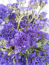 Dried flowers Dried limonium Dried statice Violet floristic real dried