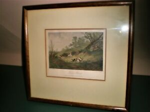 1854 hand coloured steel engraving  dogs and a fox