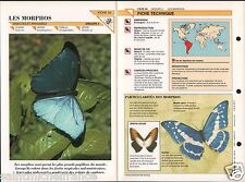 Morpho menelaus didius Papillon Mexico butterfly Insect FICHE FRANCE