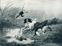COCKER SPANIEL WORKING ENGLISH GUNDOG DOG ANTIQUE PRINT - Duck Shooting Marshes