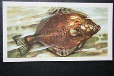 Flounder  Flatfish  Vintage Illustrated Card  VGC / EXC