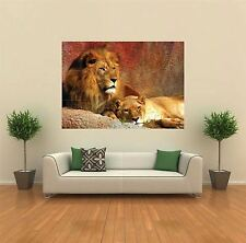 LION LIONESS ANIMAL NEW GIANT POSTER WALL ART PRINT PICTURE G156
