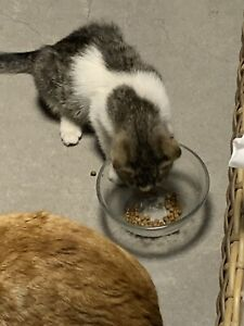 DONATE TO CAT FEEDING AND CARE IN A HOME SHELTER