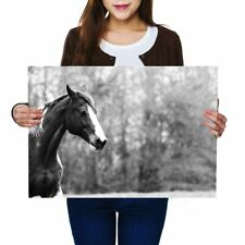 A2 - Beautiful Brown Horse Equestrian Pony Poster 59.4X42cm280gsm(bw) #41438