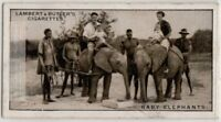 Baby African Elephants Captured Rhodesia Africa 1930s Trade Ad Card