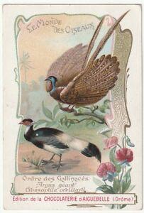 chromo aiguebelle. oiseaux- gallinacés (l'argus géant & crossoptile oreillard)