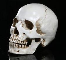 Lovely mini skull Human Skull Replica Resin Horrible Halloween gifts strange