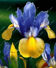 20pc iris plantas, Nature plants Orchid bonsais planta seeds. #371