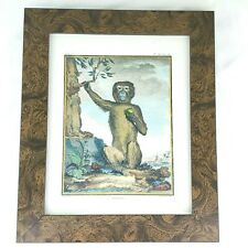 Monkey Book Plate Art Magot