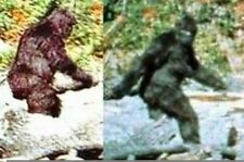 Sasquatch Documentary Collection Bigfoot Dvd's Yeti Abominable Snowman Monsters