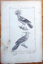 Le Pigeon Couronne, Le Pigeon de Longup 1830s French Bird Print