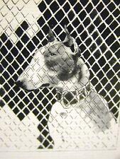 John Held 1930 BULL TERRIER PRISONER DOG Print Matted