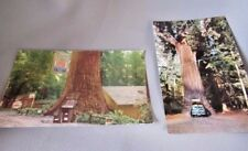 GIANT REDWOOD TREE'S LOT OF 3 POSTCARDS EARLY VINTAGE FALLEN TREE & TOURIST SITE