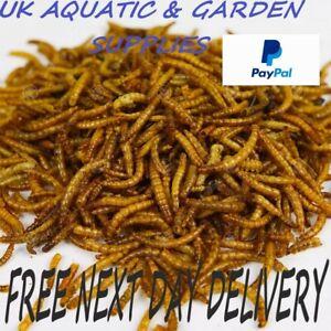 JUICY Dried Mealworms / Calciworm Mix Premium Wild Bird Food Large Worms Snacks