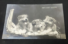 Vintage RPPC Real Photo Postcard Three Sleepy Puppy Dogs Rotograph Series B1637