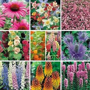 6 Hardy Mixed Perennial Patio Plug Plants Different Varieties