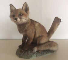 Tierpräparat Fuchs Jungfuchs sitzend ausgestopft Taxidermy