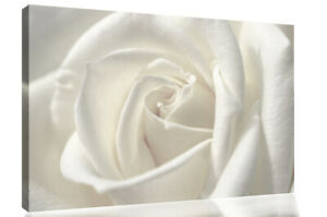 White single rose flower Canvas Wall Art Picture Print - All Sizes