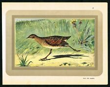 1933 Corn Crake Game Bird, Crex Crex, Antique Print - Manufrance