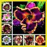 100 Stücke Seltene Hybrid Taglilie Blumensamen Hausgarten Multi-Color Mix Bonsai