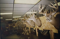 Vintage Photo Slide 1988 Deer Forum Dryden New York