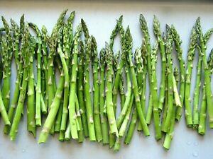 1-36 ASPARAGUS COLOSSUS PLANTS 9CM POTS PERENNIAL GRADE 1 COMMERCIAL QUALITY