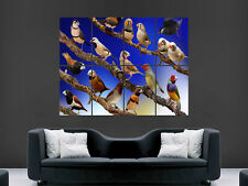 BIRDS WILDLIFE POSTER TREE BRANCHES COLLAGE FOREST IMAGE  ART PRINT LARGE