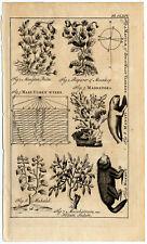 Antique Print-MANATEE-POPPY-VINCA-MOON REVOLUTION-SUN SPOT-CORAL-Buys-1770
