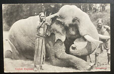 1909 Colombo Ceylon RPPC postcard Cover To Haarlem Netherlands Elephant