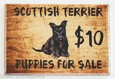 Scottish Terrier Puppies For Sale FRIDGE MAGNET (2 x 3 inches) sign scottie