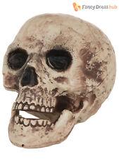 Large Skull Head Prop Halloween Fancy Dress Party Decoration Skeleton Scary
