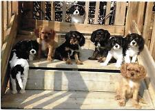 One We are Waiting for You! Cavalier King Charles Spaniel Puppies Note Card