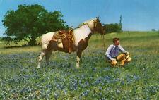 postcard USA  Texas cowboy relaxing in a bluebonnet field  unposted