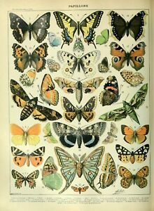 Papillons A A3 Butterfly identification chart wildlife insect vintage art Poster