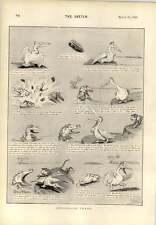 1893 Dudley Hardy astronomía personificación Louis Wain lágrimas de cocodrilo