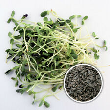 Tournesol Organique Graines de choux ou microgreens UK Stock