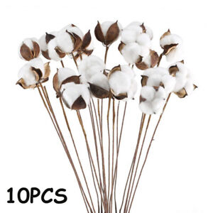 10PCS/LOT DIY Naturally Dried Cotton Stems  Artificial  Flower Head Branch 60cm.