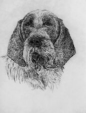 GEOFFREY LASKO - ITALIAN SPINONE DOG - ORIGINAL ETCHING -S&N - FREE SHIP