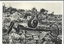 colle di sant elia cartolina D' epoca sacrario prima guerra mondiale 71037
