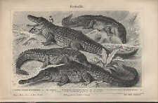 Lithografie 1908: Krokodile. Schildkröten. Kaiman Gavial Karett-Lederschildkröte