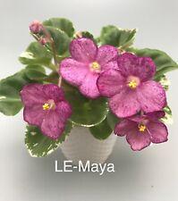African Violet Rus/Ukr ~*Le-Maya *~ Sm starter girl foliage