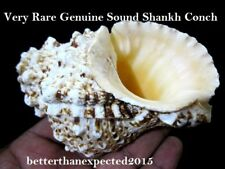 VERY RARE SPECIAL POOJA SOUND SHANKHA SHANKH CONCH SHELL HINDU DIVINE WORSHIP