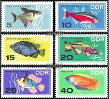 DDR 1221-1226 (édition complète) oblitéré 1966 poissons d'ornement