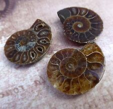 Split ammonite fossil perles amonite beads pack de 2