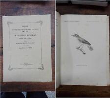 MAGNI-GRIFFI F. - Di una specie d'Hippolais nuova per l'Italia - 1865