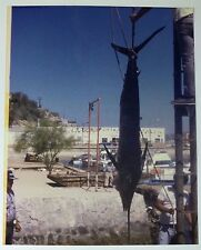 Vintage 90s PHOTO Men Hoisting Large Fresh Caught Fish At The Beach