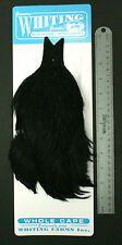 Whiting Dyed Black Flatwing/Steelhead Blue Label Rooster Cape New